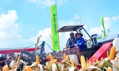 Pemkab Lamongan Tingkatkan Keuntungan Petani dengan Pertanian Jagung Modern